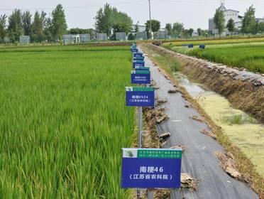 喜讯!我市水稻绿色高质高效创建工作位列全省第一方阵